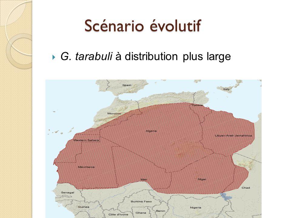 Scénario évolutif G. tarabuli à distribution plus large