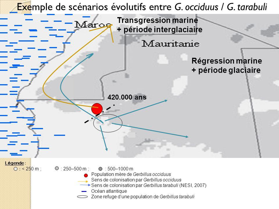 Exemple de scénarios évolutifs entre G. occiduus / G. tarabuli