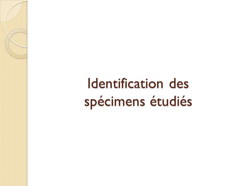 Identification des spécimens étudiés