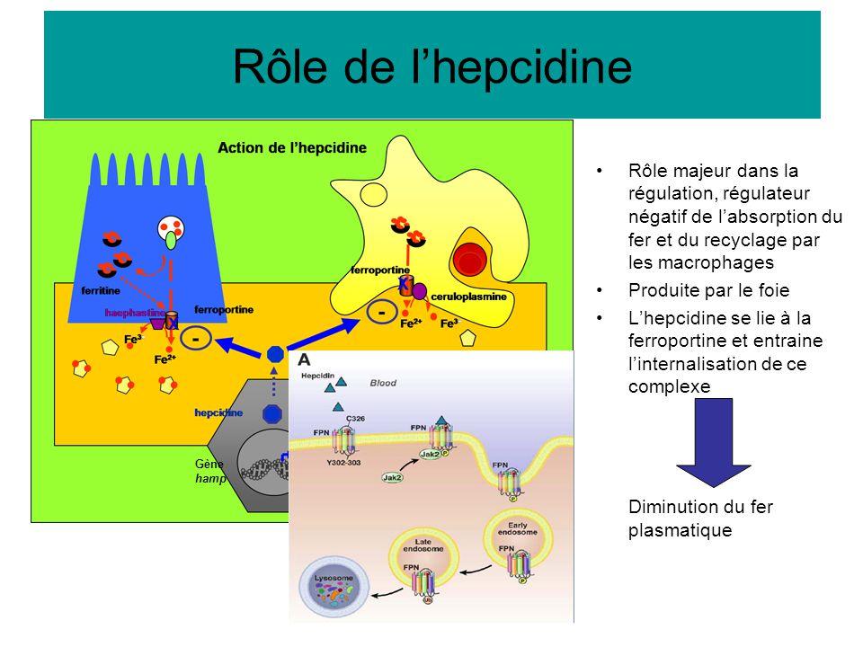 Rôle de l'hepcidine Diminution du fer plasmatique