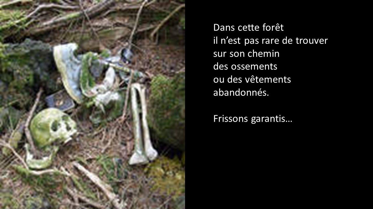 Dans cette forêt il n'est pas rare de trouver sur son chemin. des ossements. ou des vêtements abandonnés.