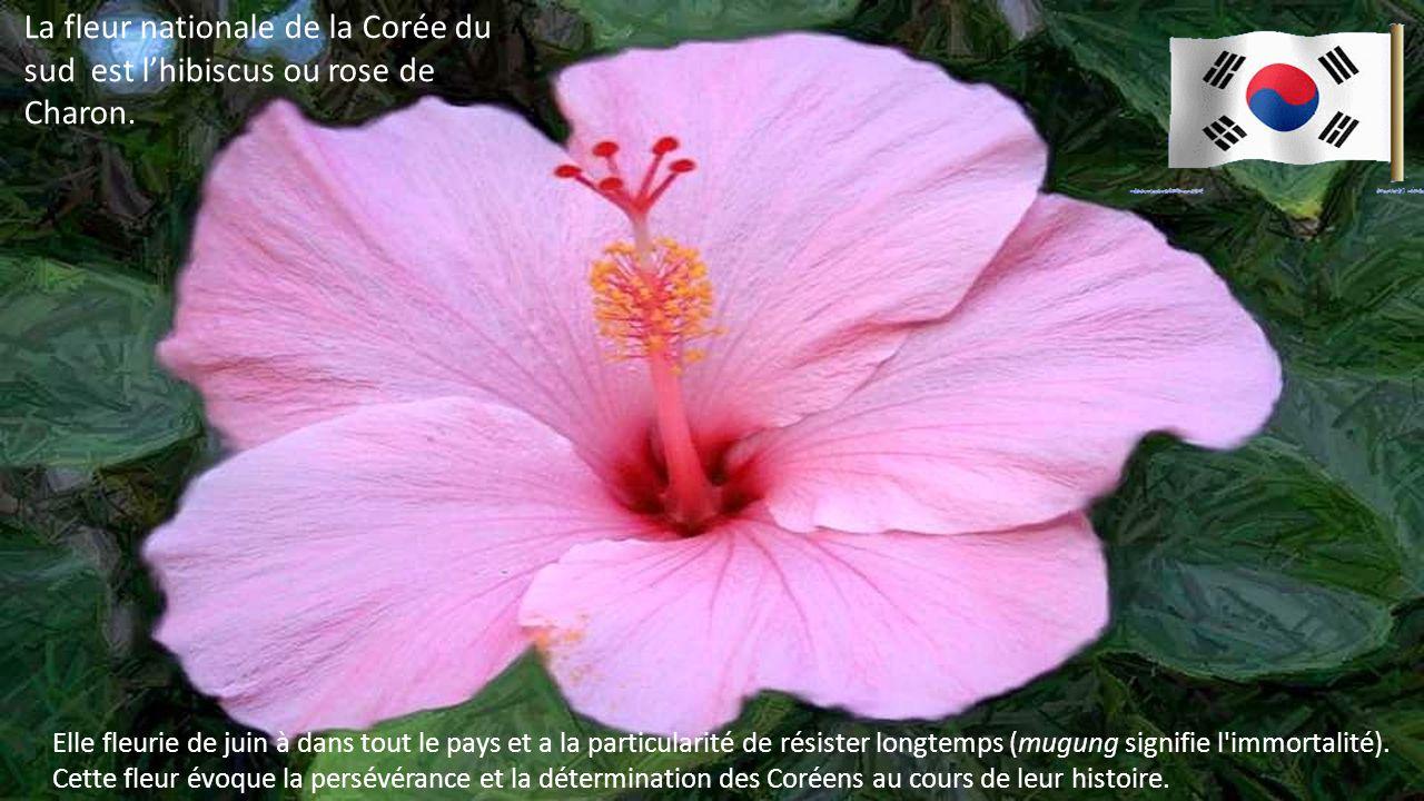 La fleur nationale de la Corée du sud est l'hibiscus ou rose de Charon. La fleur nationale de la Corée du sud est l'hibiscus ou rose de Charon.