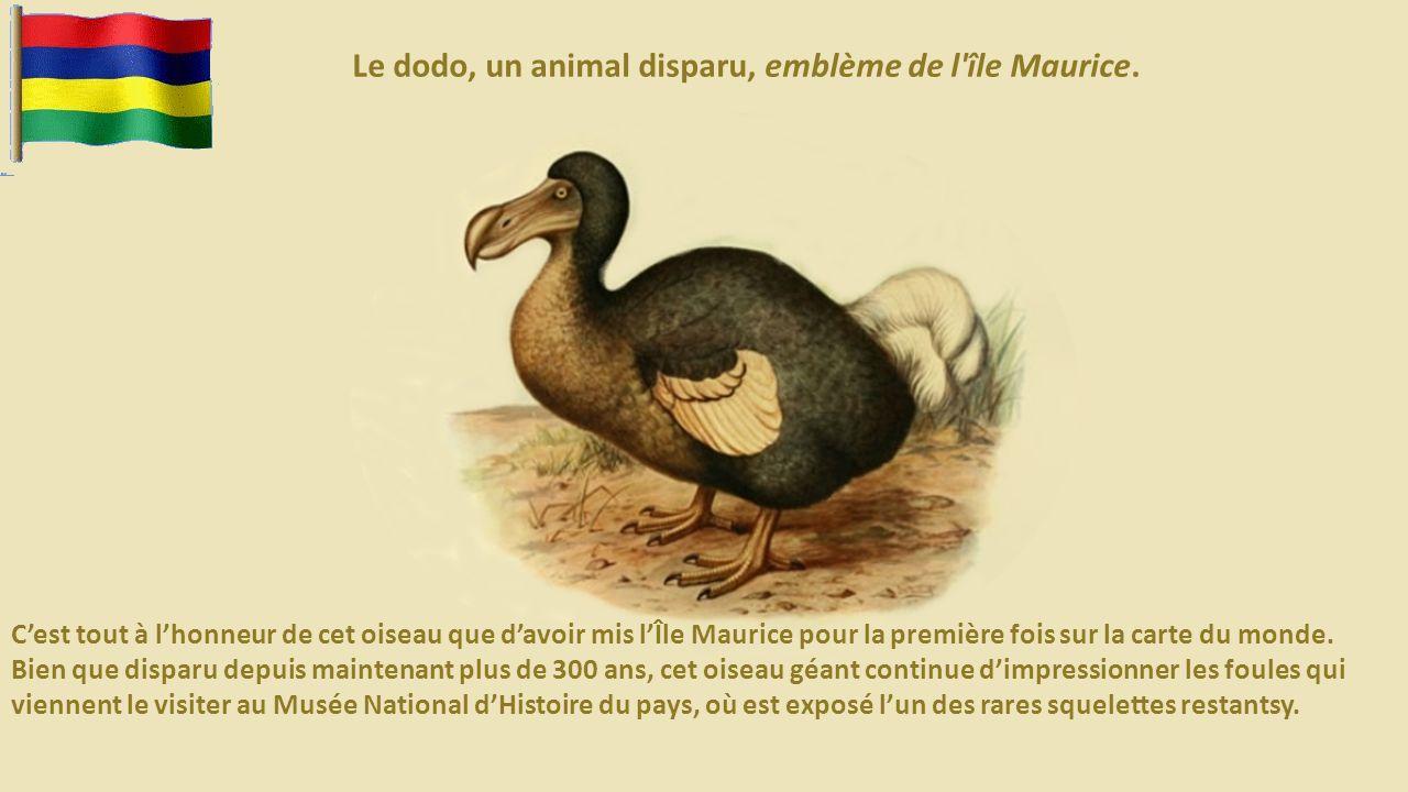 Le dodo, un animal disparu, emblème de l île Maurice.