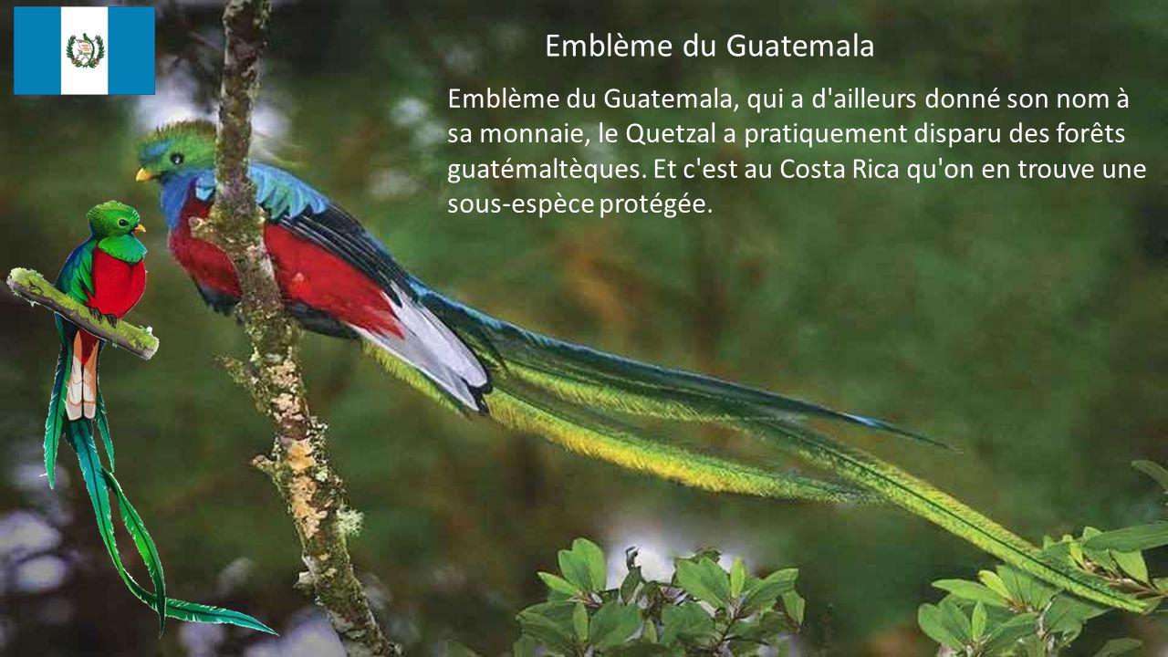 Emblème du Guatemala