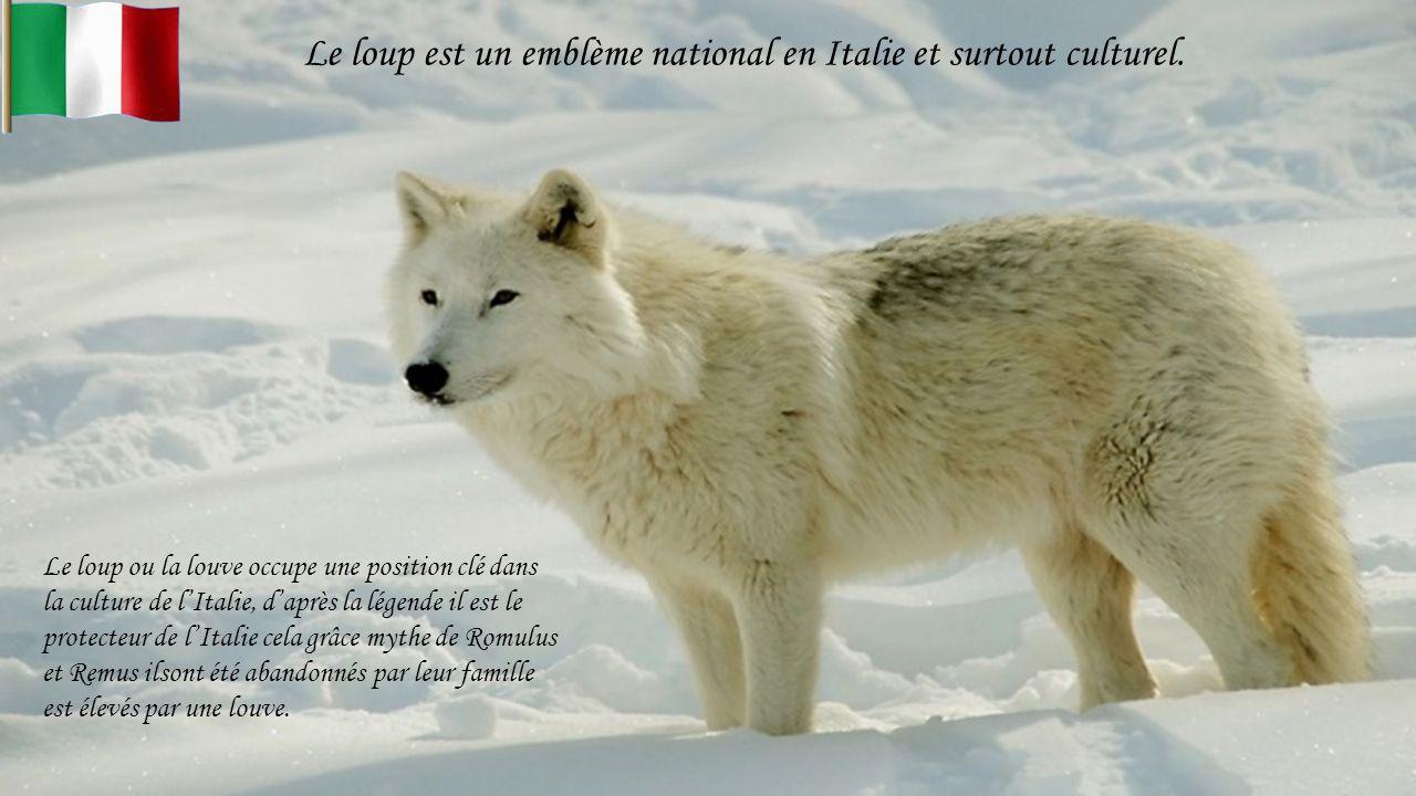 Le loup est un emblème national en Italie et surtout culturel.