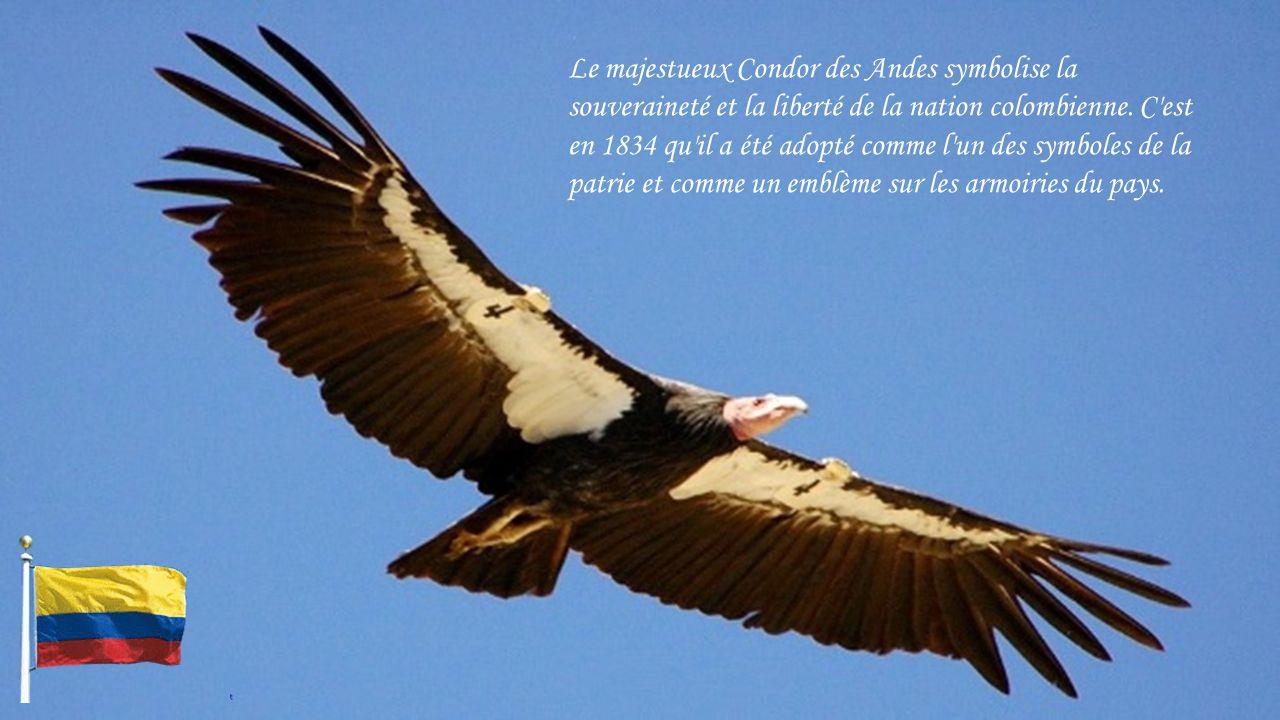 Le majestueux Condor des Andes symbolise la souveraineté et la liberté de la nation colombienne.