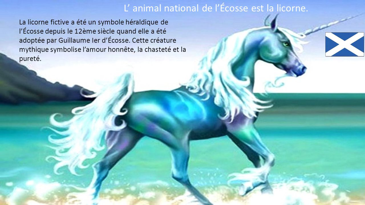 L' animal national de l'Écosse est la licorne.