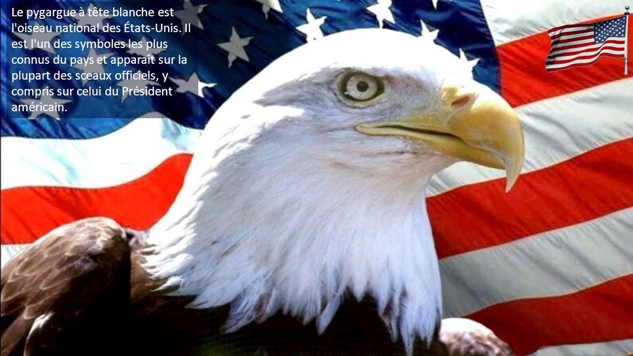 Le pygargue à tête blanche est l oiseau national des États-Unis