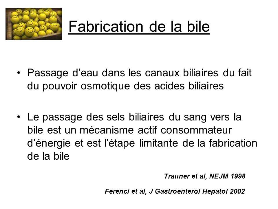 Fabrication de la bile Passage d'eau dans les canaux biliaires du fait du pouvoir osmotique des acides biliaires.