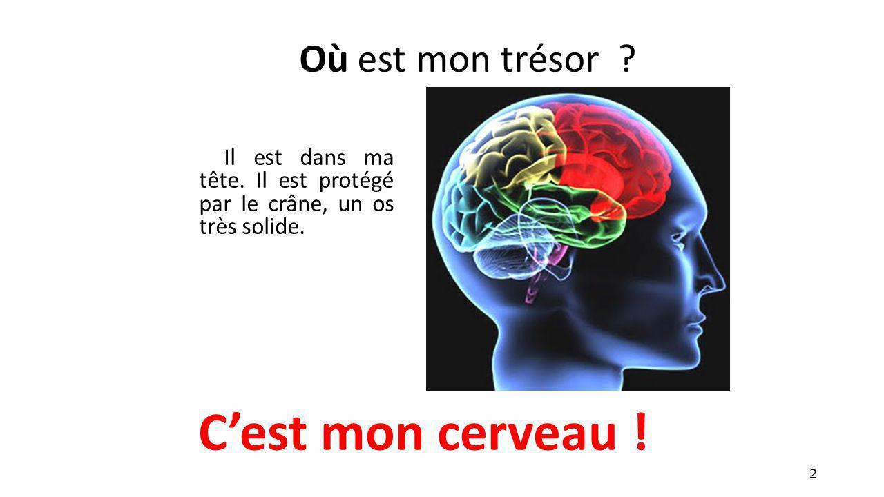 C'est mon cerveau ! Où est mon trésor
