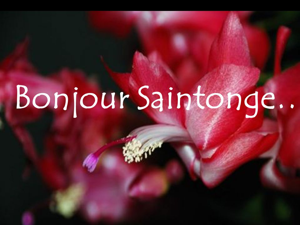 Bonjour Saintonge…