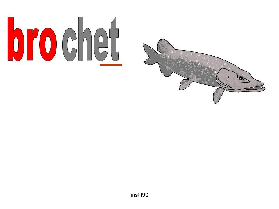 bro chet instit90