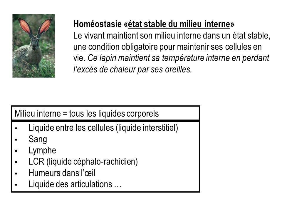 Homéostasie «état stable du milieu interne»