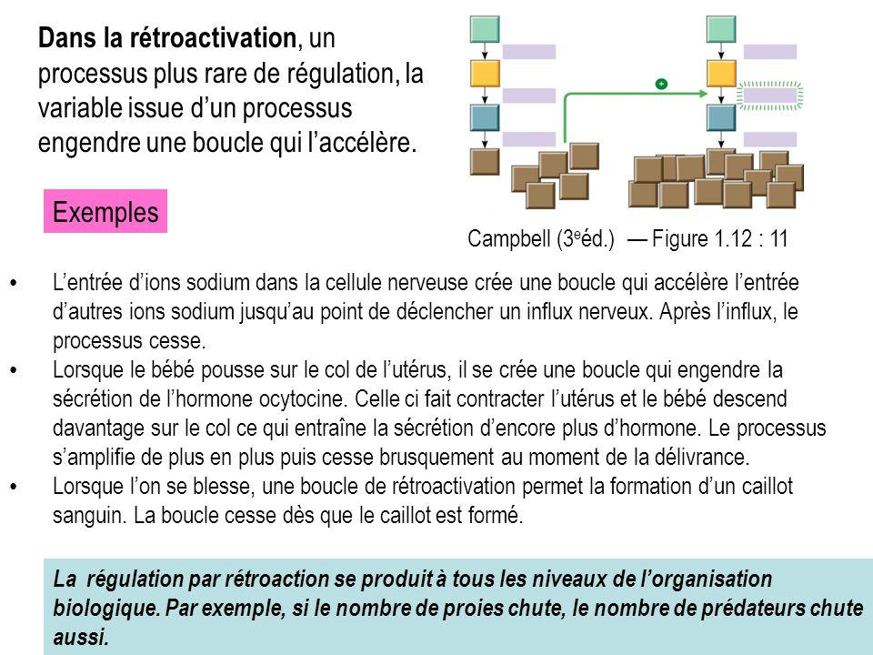 Dans la rétroactivation, un processus plus rare de régulation, la variable issue d'un processus engendre une boucle qui l'accélère.