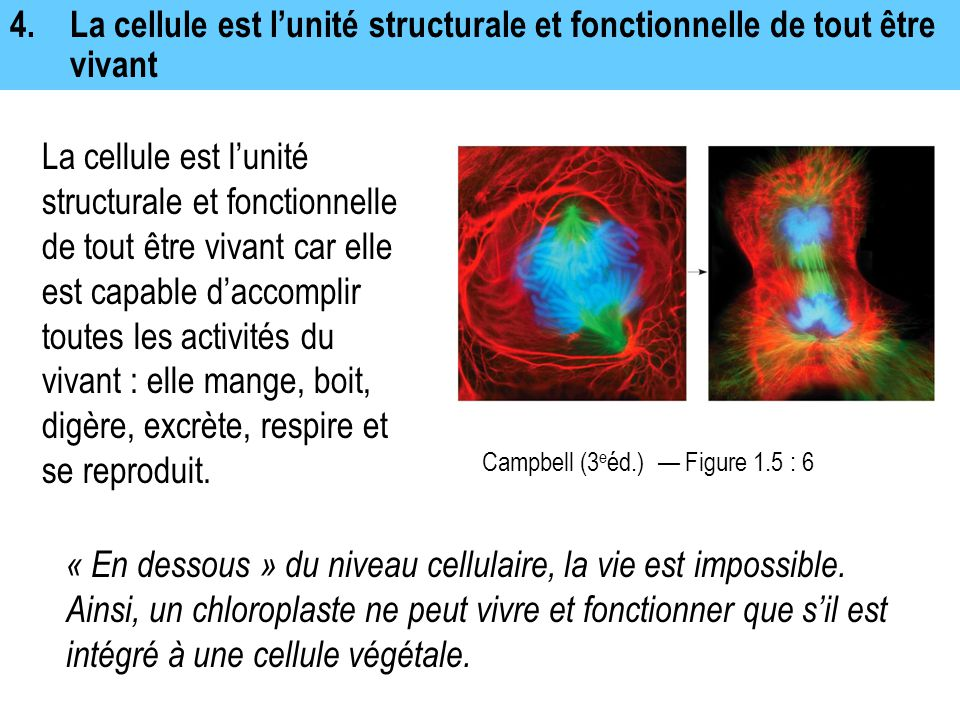 4. La cellule est l'unité structurale et fonctionnelle de tout être vivant