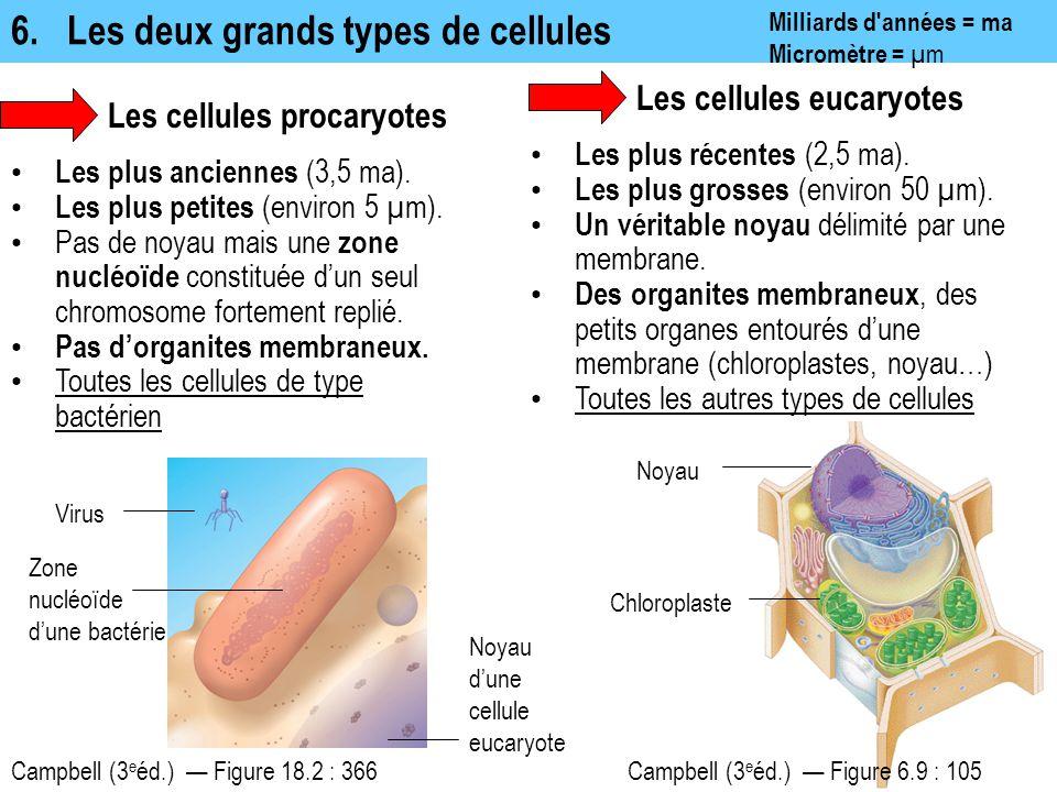 6. Les deux grands types de cellules