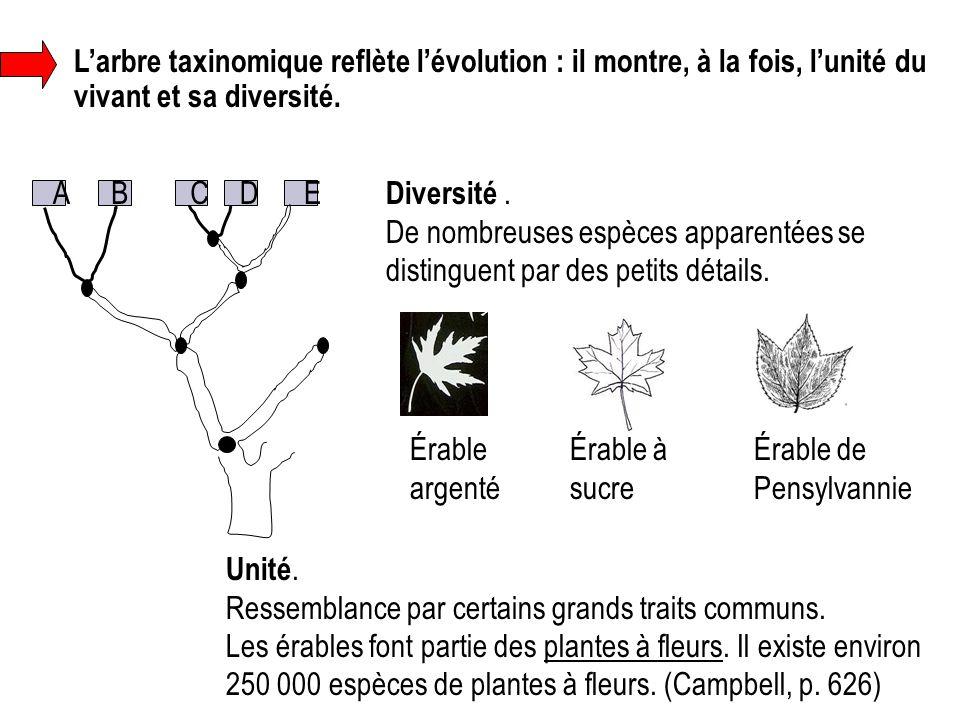 L'arbre taxinomique reflète l'évolution : il montre, à la fois, l'unité du vivant et sa diversité.