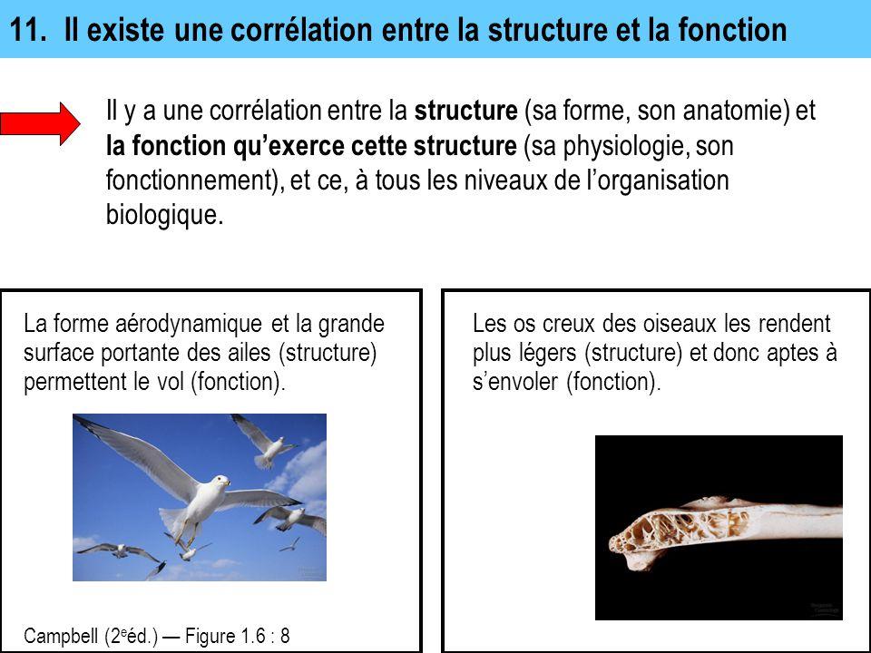 11. Il existe une corrélation entre la structure et la fonction