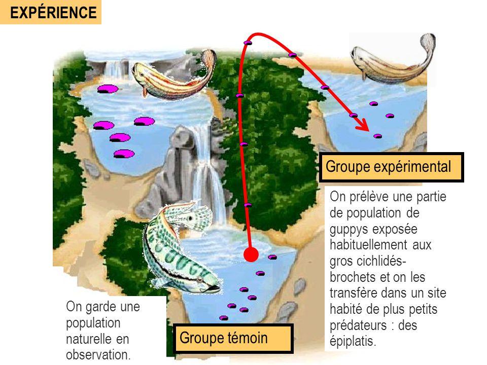 EXPÉRIENCE Groupe expérimental Groupe témoin
