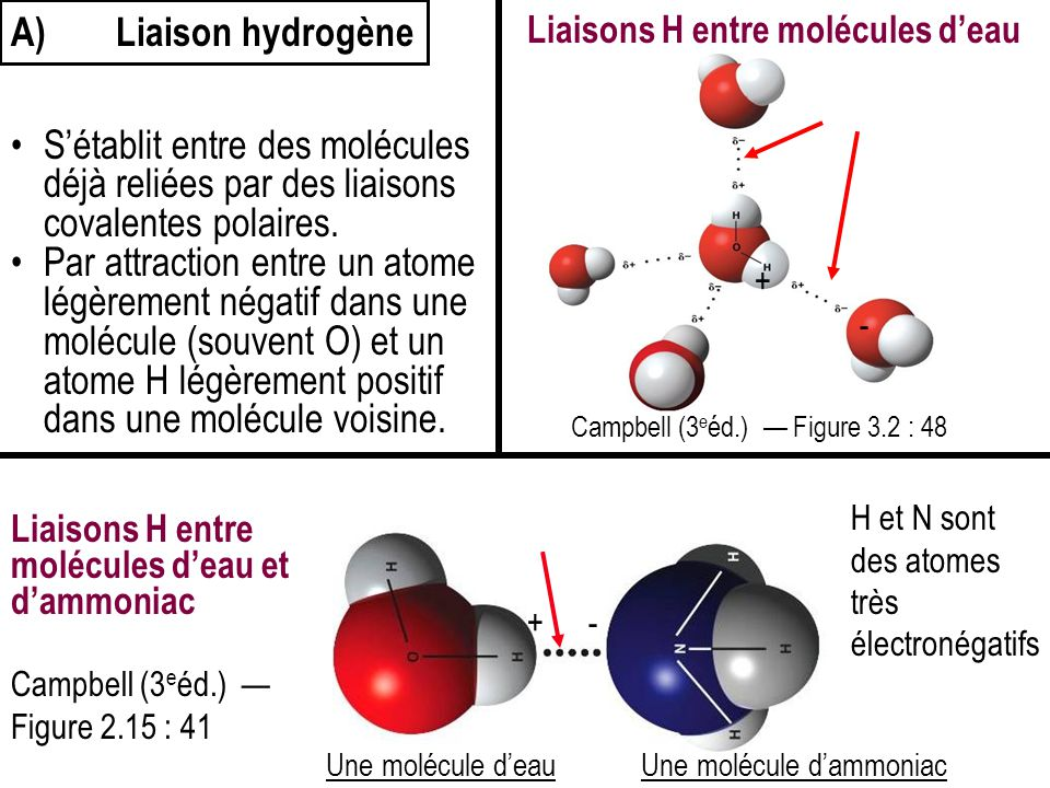 A) Liaison hydrogène Liaisons H entre molécules d'eau. S'établit entre des molécules déjà reliées par des liaisons covalentes polaires.