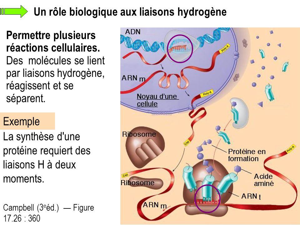 Un rôle biologique aux liaisons hydrogène