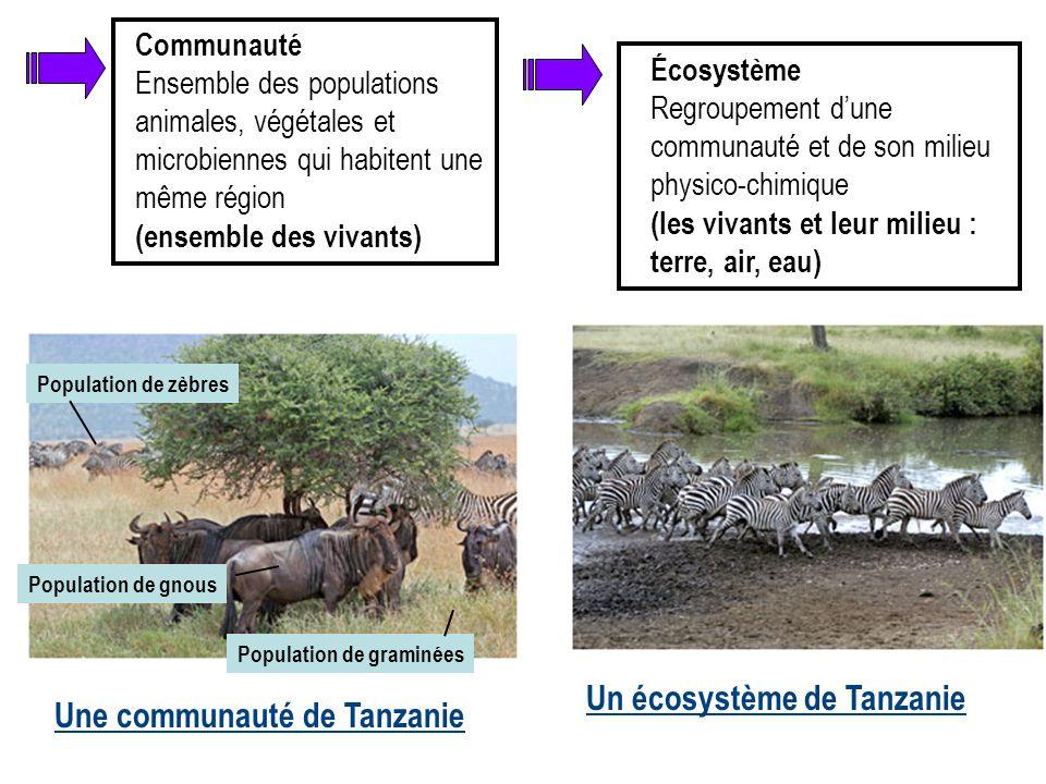 Un écosystème de Tanzanie Une communauté de Tanzanie