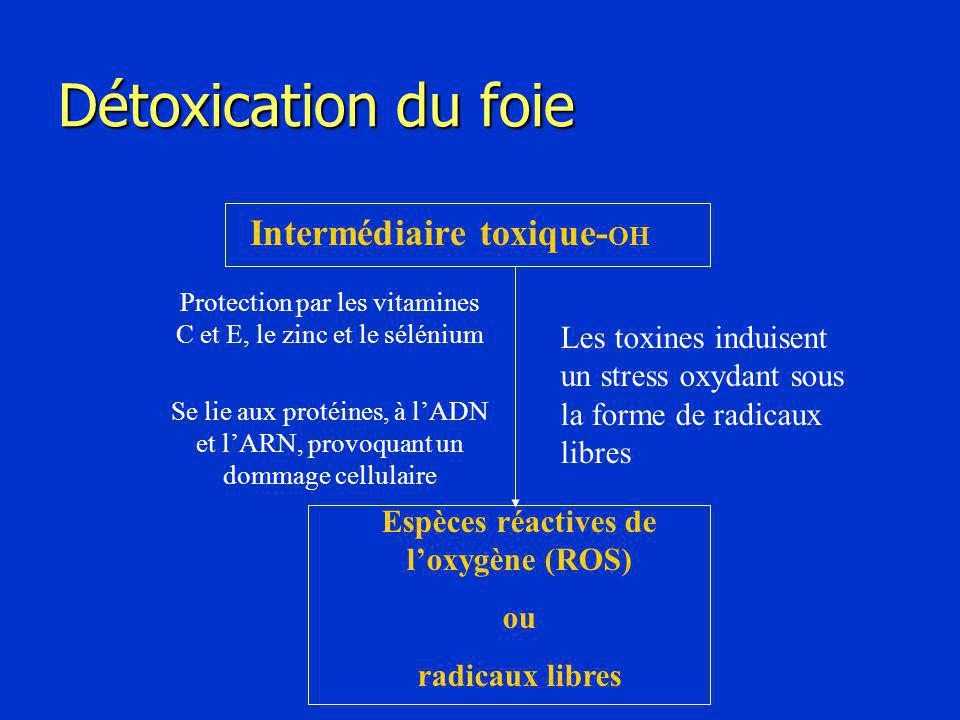Espèces réactives de l'oxygène (ROS)