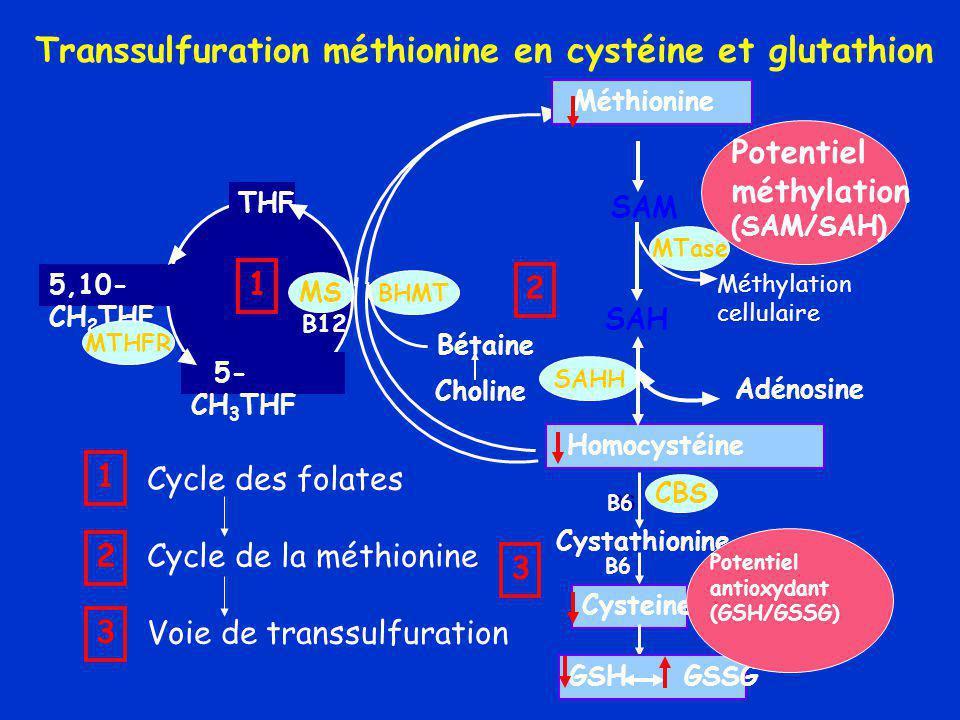 Transsulfuration méthionine en cystéine et glutathion