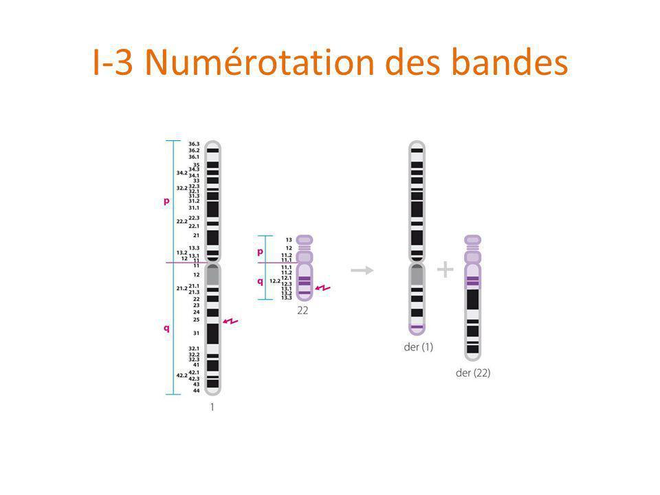 I-3 Numérotation des bandes