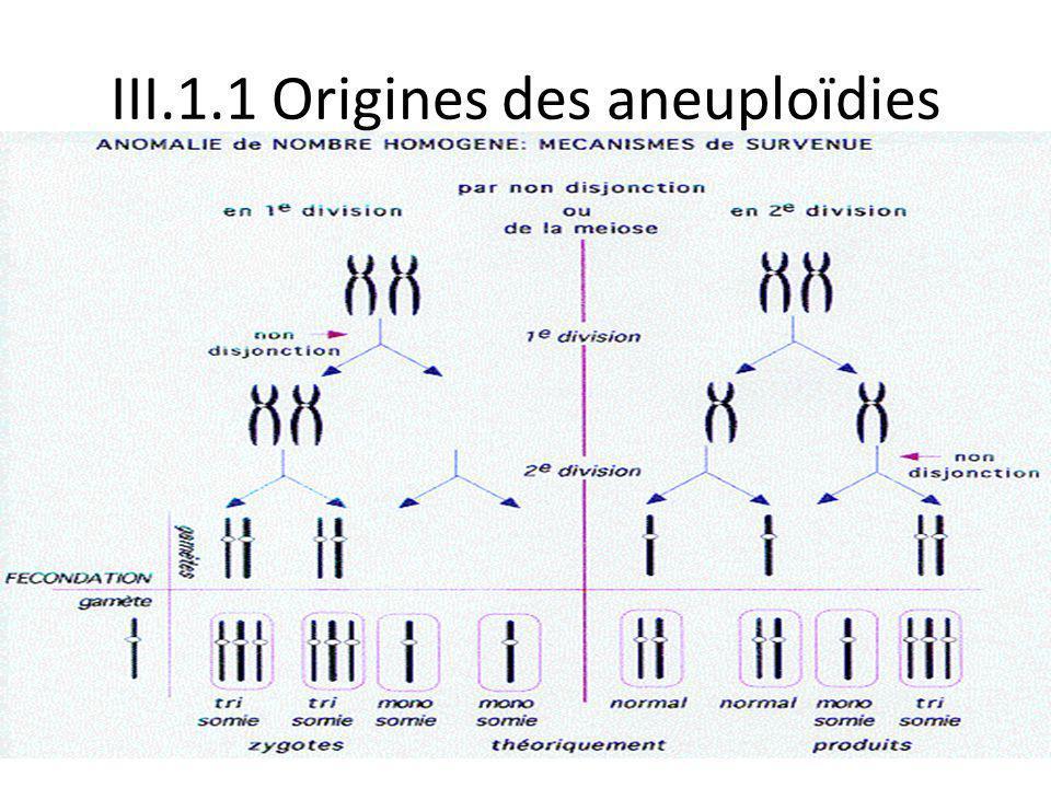 III.1.1 Origines des aneuploïdies