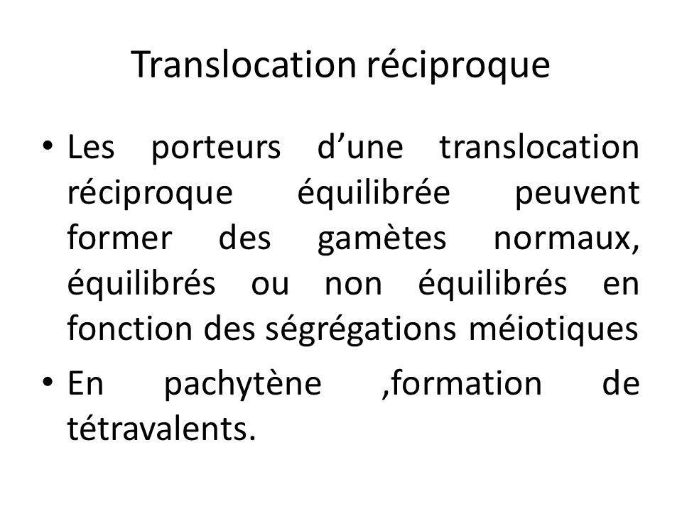 Translocation réciproque