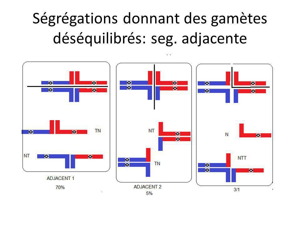 Ségrégations donnant des gamètes déséquilibrés: seg. adjacente