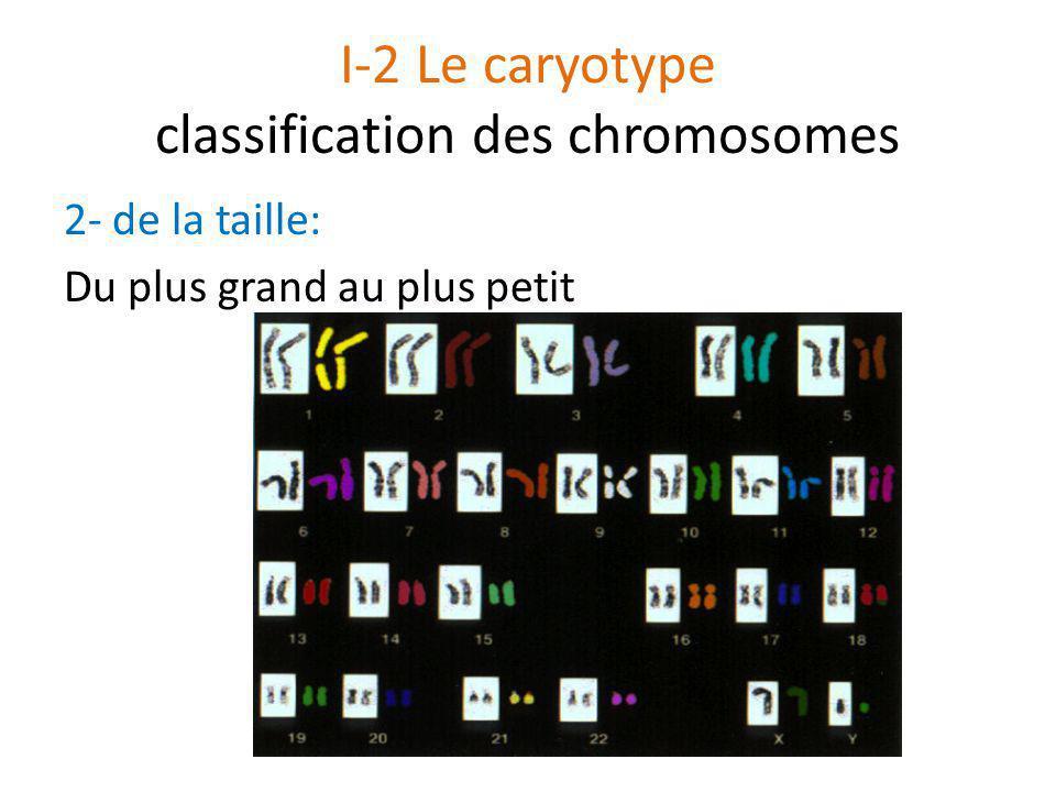 I-2 Le caryotype classification des chromosomes