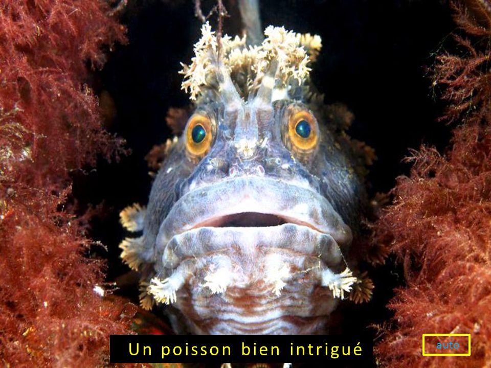 Un poisson bien intrigué