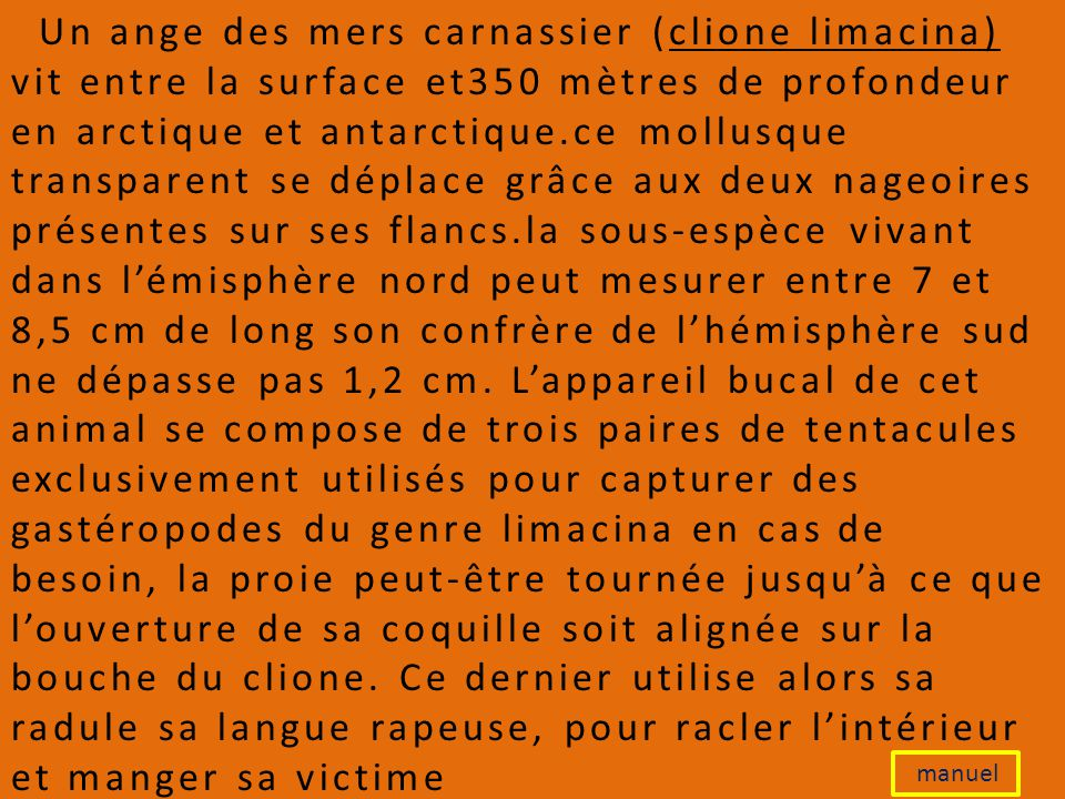Un ange des mers carnassier (clione limacina) vit entre la surface et350 mètres de profondeur en arctique et antarctique.ce mollusque transparent se déplace grâce aux deux nageoires présentes sur ses flancs.la sous-espèce vivant dans l'émisphère nord peut mesurer entre 7 et 8,5 cm de long son confrère de l'hémisphère sud ne dépasse pas 1,2 cm. L'appareil bucal de cet animal se compose de trois paires de tentacules exclusivement utilisés pour capturer des gastéropodes du genre limacina en cas de besoin, la proie peut-être tournée jusqu'à ce que l'ouverture de sa coquille soit alignée sur la bouche du clione. Ce dernier utilise alors sa radule sa langue rapeuse, pour racler l'intérieur et manger sa victime
