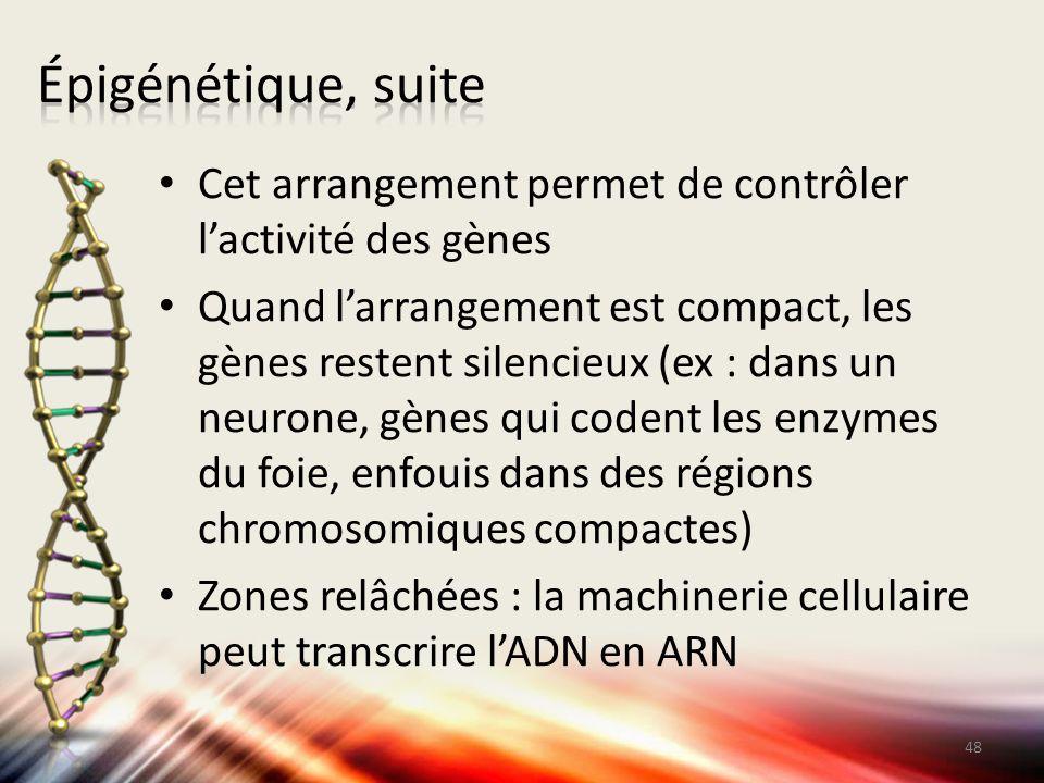 Épigénétique, suite Cet arrangement permet de contrôler l'activité des gènes.