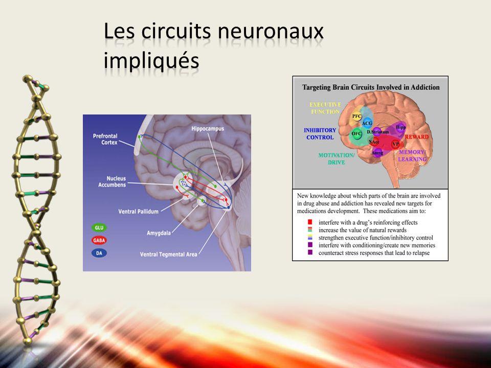 Les circuits neuronaux impliqués