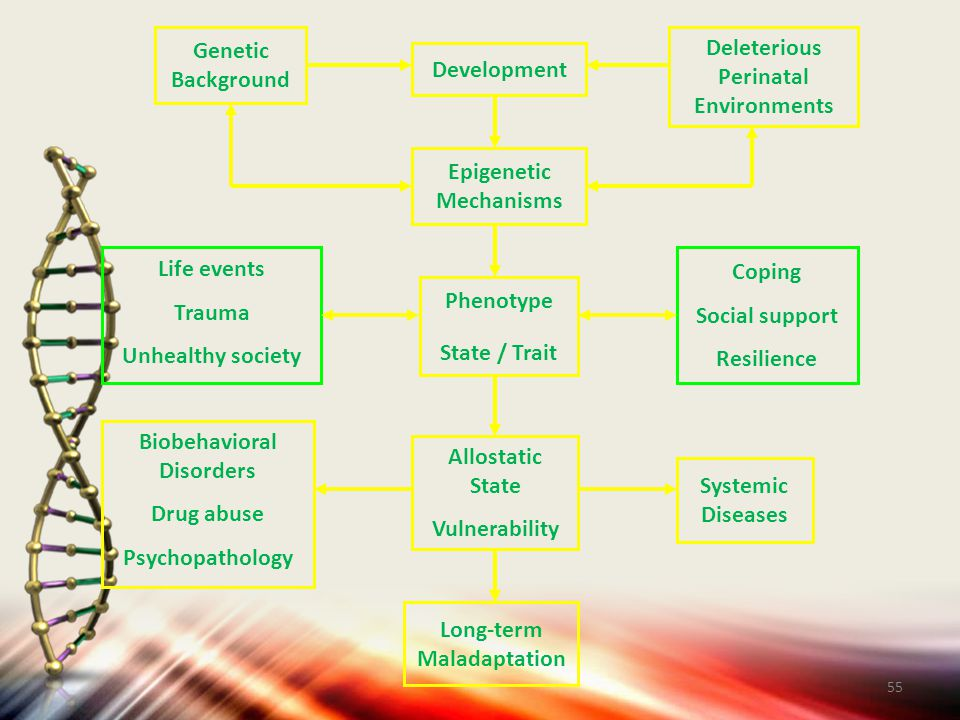 Genetic Background. Deleterious. Perinatal. Environments. Development. Epigenetic. Mechanisms.