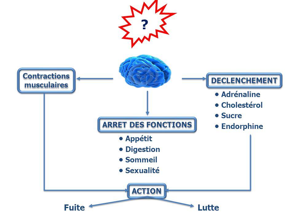 Fuite Lutte Contractions musculaires DECLENCHEMENT • Adrénaline