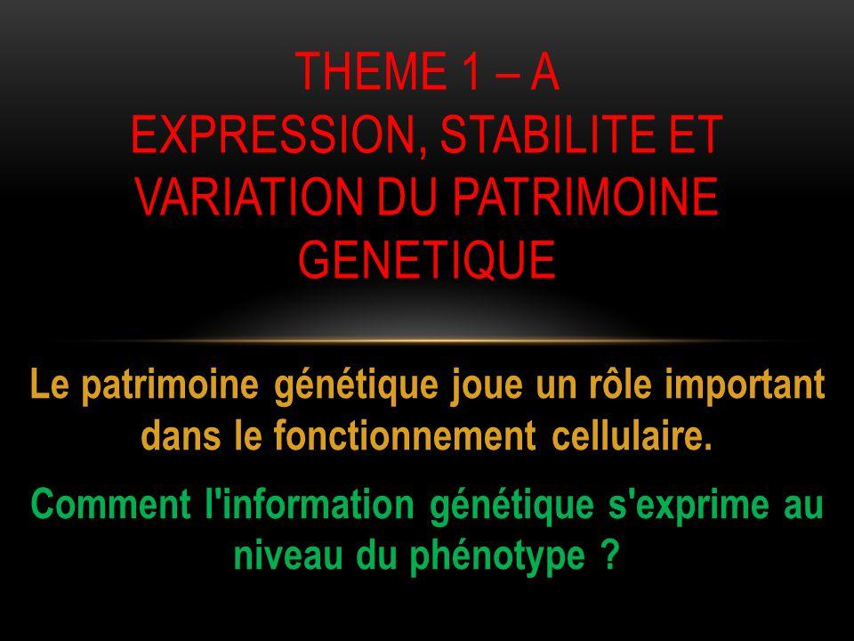 THEME 1 – A EXPRESSION, STABILITE ET VARIATION DU PATRIMOINE GENETIQUE