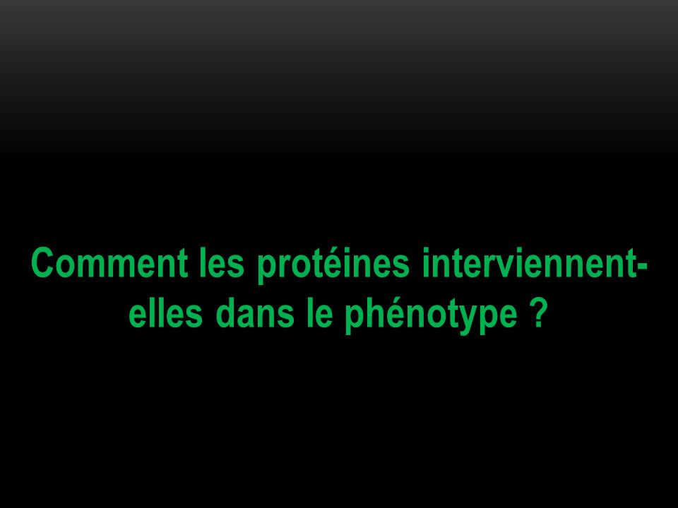 Comment les protéines interviennent- elles dans le phénotype