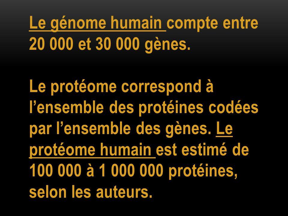 Le génome humain compte entre 20 000 et 30 000 gènes