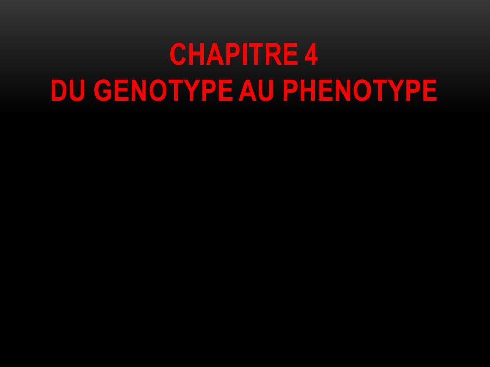 Chapitre 4 du genotype au phenotype