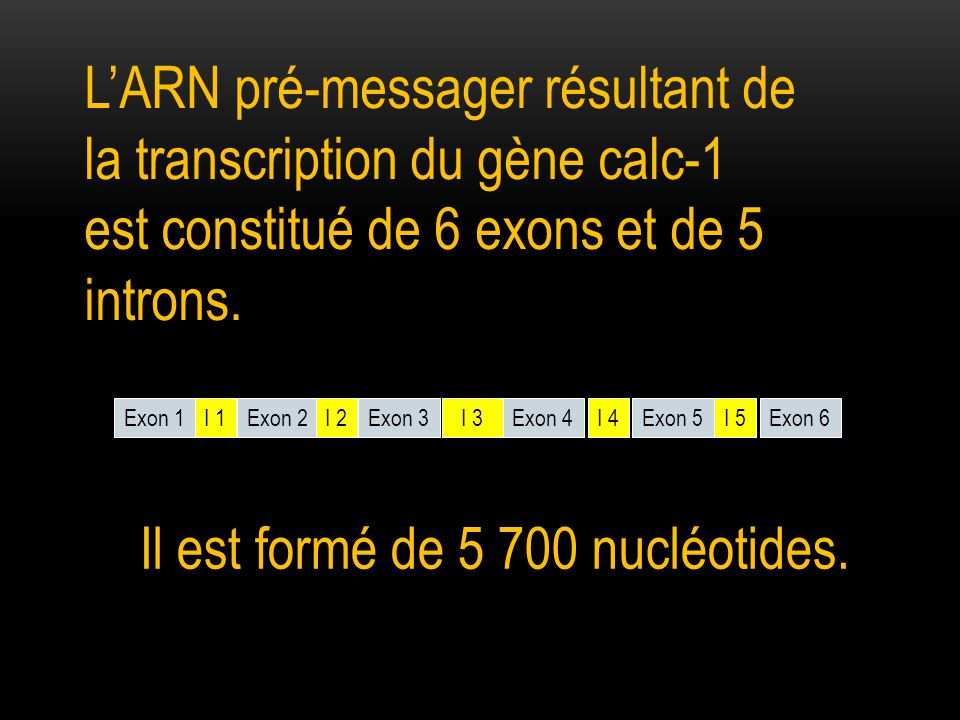 Il est formé de 5 700 nucléotides.