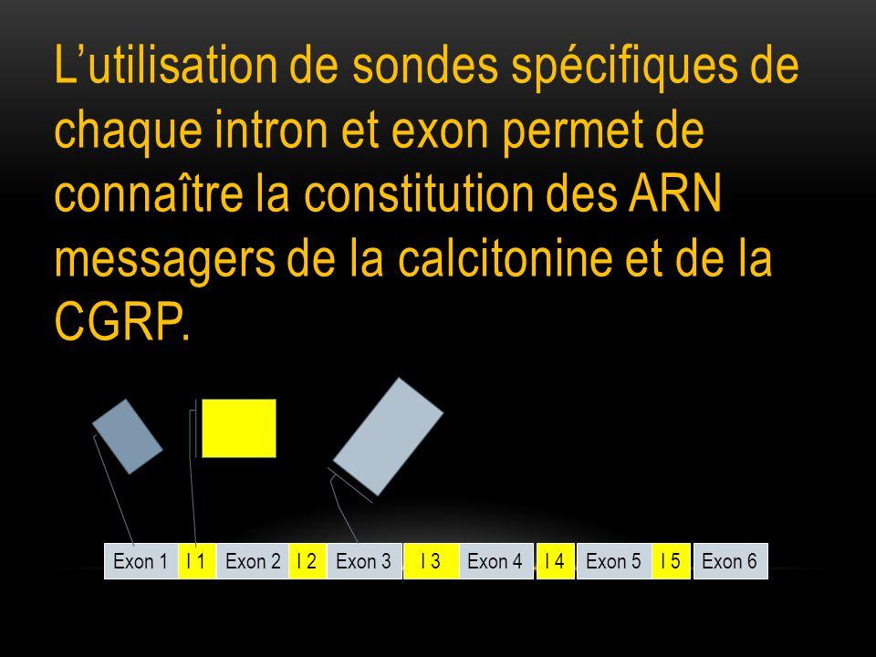 L'utilisation de sondes spécifiques de chaque intron et exon permet de connaître la constitution des ARN messagers de la calcitonine et de la CGRP.
