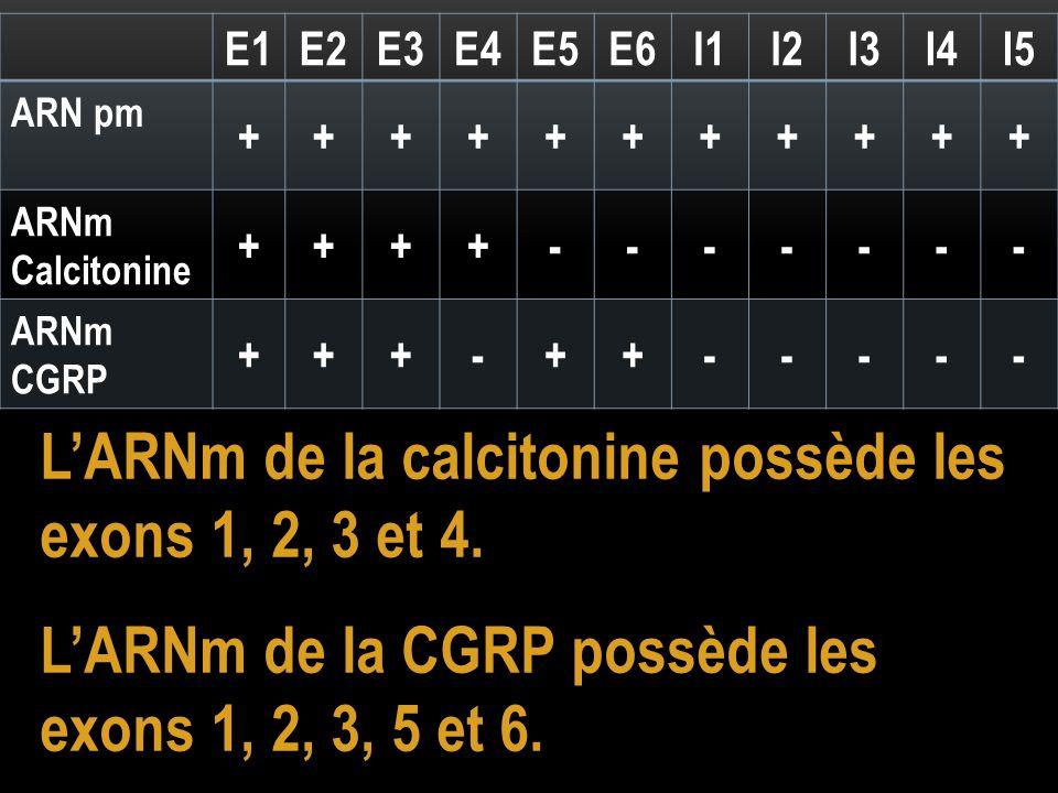 L'ARNm de la calcitonine possède les exons 1, 2, 3 et 4.