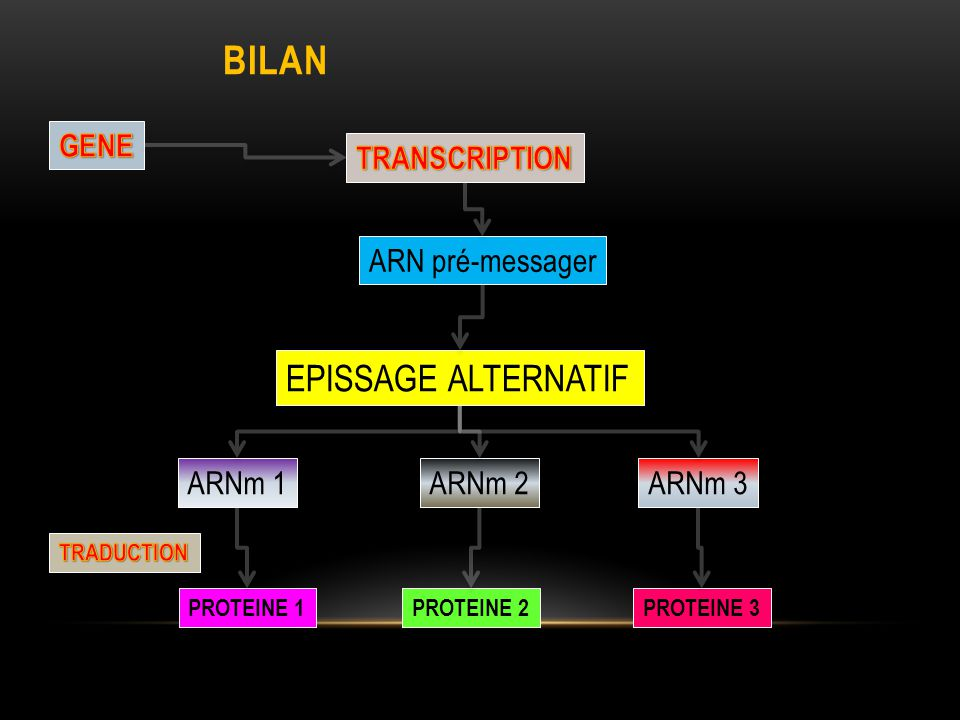 BILAN EPISSAGE ALTERNATIF GENE TRANSCRIPTION ARN pré-messager ARNm 1