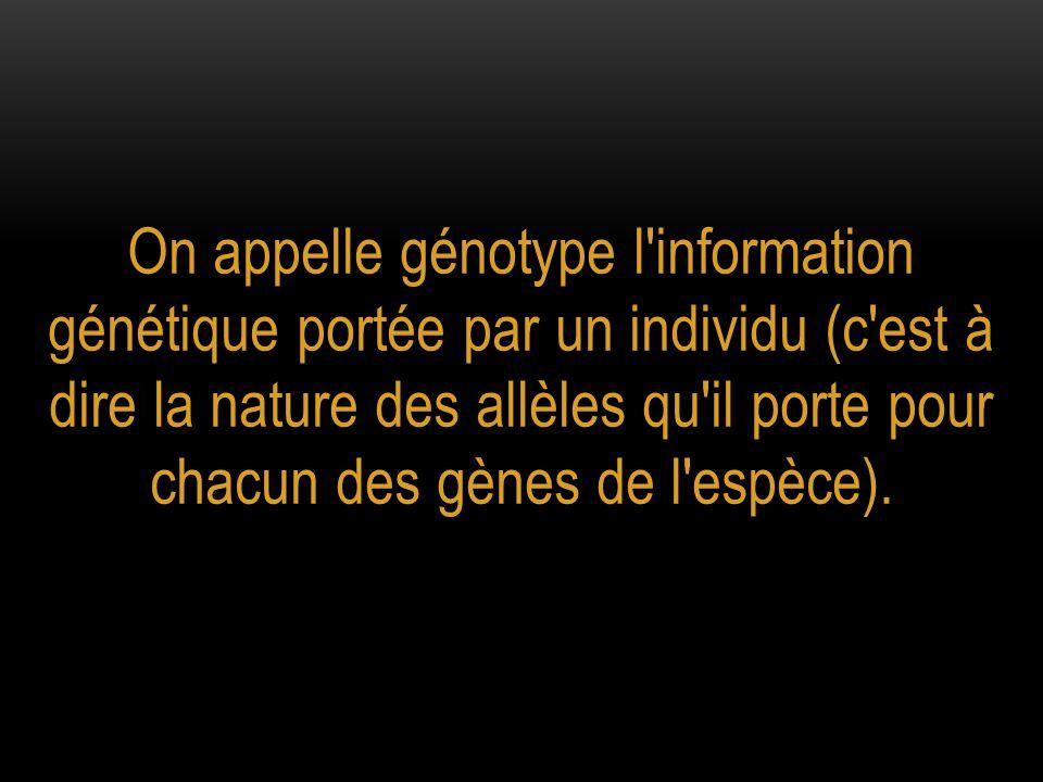 On appelle génotype l information génétique portée par un individu (c est à dire la nature des allèles qu il porte pour chacun des gènes de l espèce).