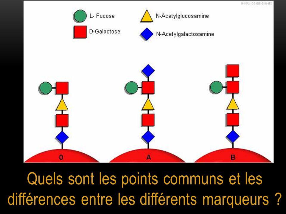Quels sont les points communs et les différences entre les différents marqueurs