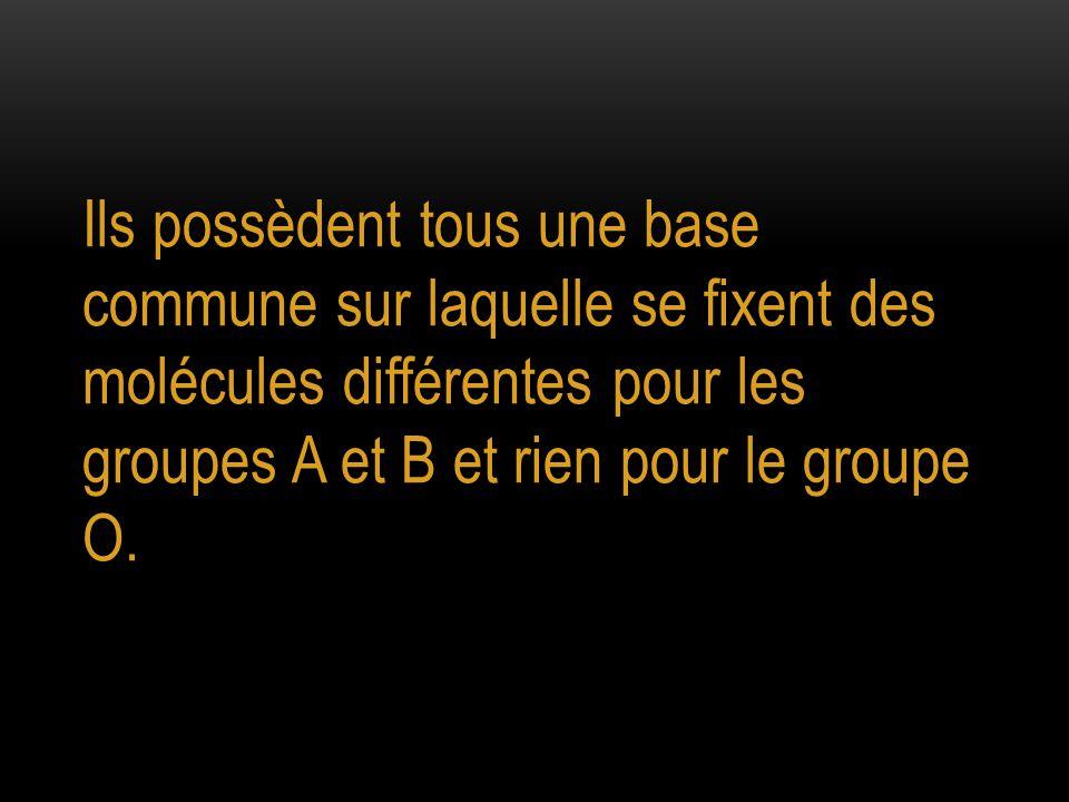 Ils possèdent tous une base commune sur laquelle se fixent des molécules différentes pour les groupes A et B et rien pour le groupe O.
